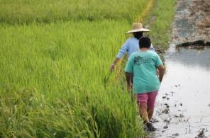 Philippines as a Field Site: Research Reflections - 4